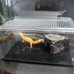 爬虫類を飼育する時にオススメの飼育ケージを紹介