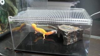 爬虫類ケージ