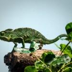 ペットにオススメの飼いやすい爬虫類を紹介!!